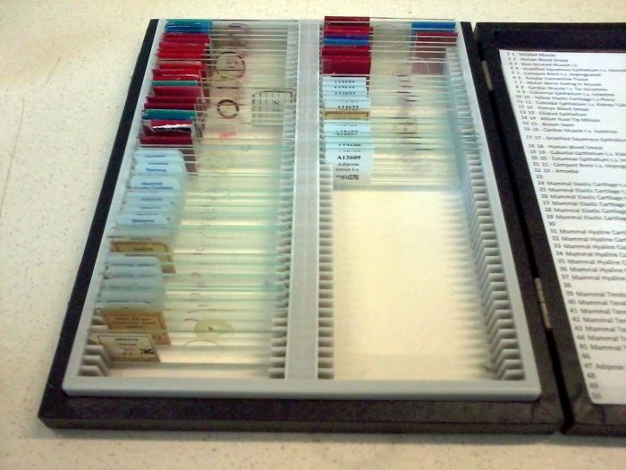 samples45678
